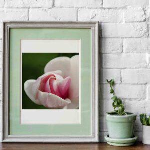 הדפסים של עבודות צילום מקוריות -אמנות אצלכם בבית- original art prints