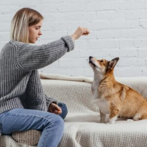 אילוף כלבים קורס אינטרנטי בשיטת רונן ספיר