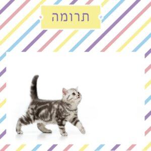 תרומה לעיקור וסירוס חתולי רחוב