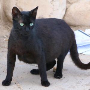 תרומה חד פעמית לעיקור וסירוס חתולי רחוב